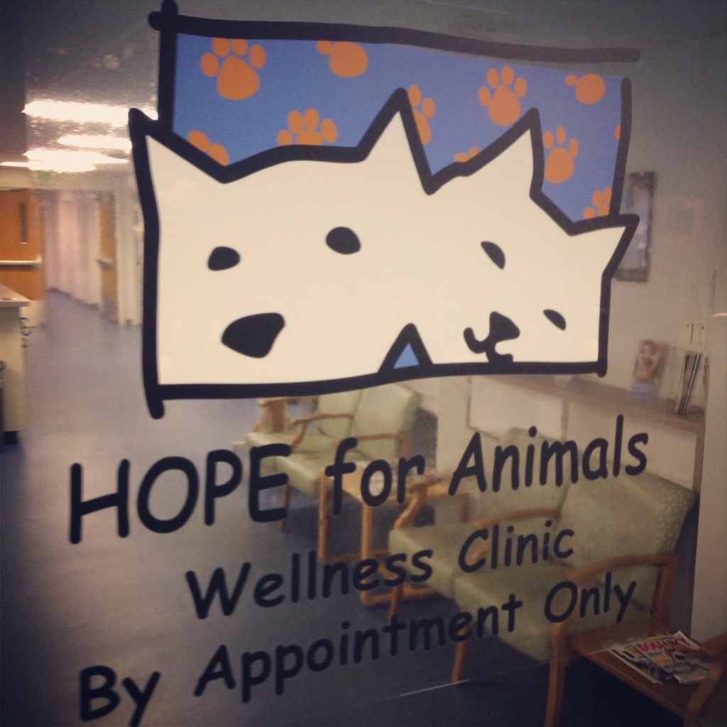 Impact 52 volunteers at HOPE for Animals