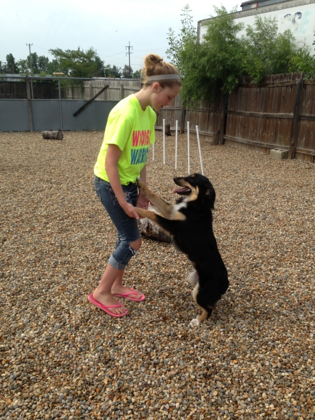 Impact 52 plays with dogs at ACSPCA
