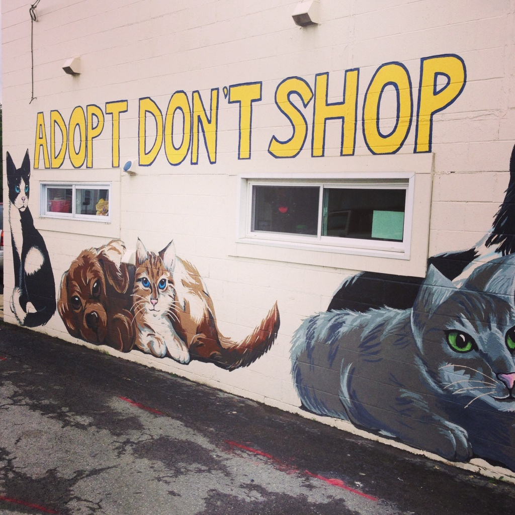 Impact 52 says Adopt, Don't Shop